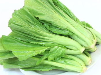 芥菜(小叶)