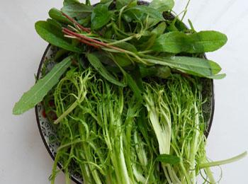 苣荬菜(尖叶)