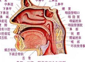 侧卧时位于下侧鼻腔出现鼻塞