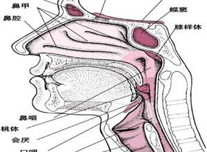 鼻塞及反射性头痛