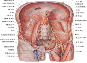 扁平型骨盆