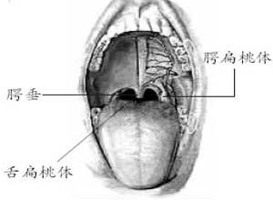 扁桃体上有灰色膜
