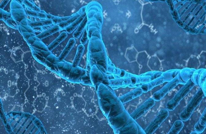 这种基因变体可降低罹患严重疟疾风险达40%