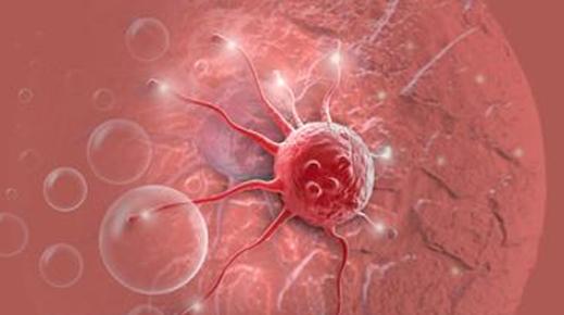 研究人员用透明实验鼠观察癌细胞转移