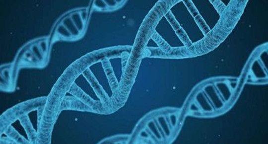 """360个遗传疾病动物模型""""现形""""有助研究罕见疾病机理并开发新疗法"""