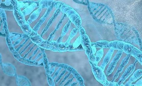 遗传性结直肠癌基因突变研究获突破