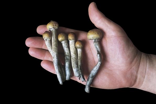 神奇蘑菇或能改变抑郁症患者大脑